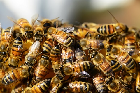 Imker, honing als basis om mede te maken